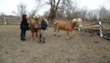 Fiku Miku z wizytę w stadninie koni