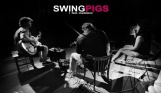 Swing Pigs , Madalena Joao
