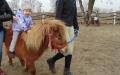 Fikusie z wizytą w stadninie koni