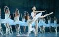 JEZIORO ŁABĘDZIE - balet w wykonaniu ROYAL LVIV BALLET