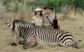 "'Safari"" - DKF PULS"